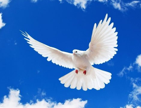 white-dove.jpg